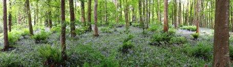 Hillsborough Forest Park
